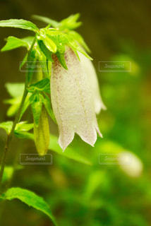 小さな花空間の写真・画像素材[1289363]