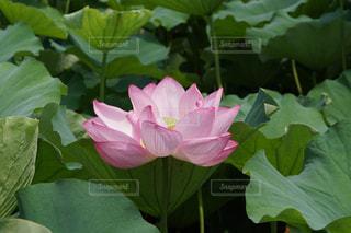 近くの緑の植物をの写真・画像素材[1324688]