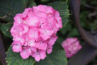 近くの花のアップの写真・画像素材[1367591]