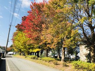 道の端に木の写真・画像素材[1241246]