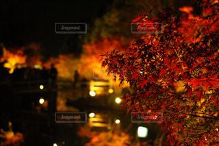 池の上での紅葉の写真・画像素材[1242253]