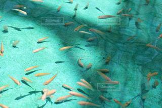 水の中の魚の群れの写真・画像素材[1243218]