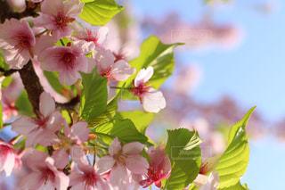 近くの花のアップの写真・画像素材[1244326]