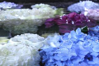 近くの花のアップの写真・画像素材[1244333]