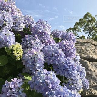 近くの花のアップの写真・画像素材[1251870]