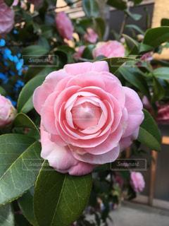 近くの植物にピンクの花のアップの写真・画像素材[1242490]
