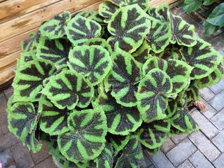 近くの緑の植物をの写真・画像素材[1242989]