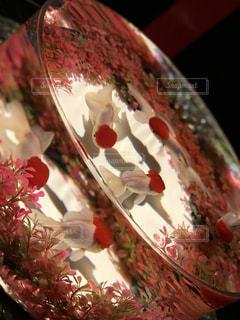 金魚の写真・画像素材[1243032]