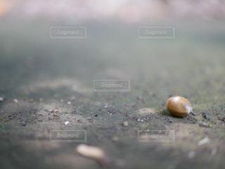 どんぐりころんの写真・画像素材[1244303]