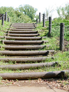 丸太の階段の写真・画像素材[1244306]