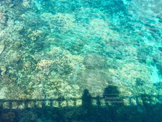 海と影の写真・画像素材[1369871]