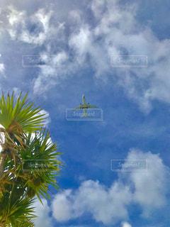 大空と飛行機の写真・画像素材[1452413]
