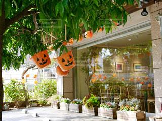 ハロウィンのバケツかぼちゃの写真・画像素材[1458837]