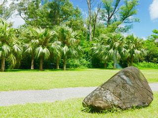 南国と岩の写真・画像素材[1480585]
