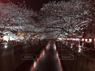目黒川の夜桜 - No.1242662
