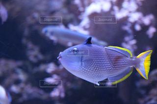 黒と黄色の魚の写真・画像素材[1248596]
