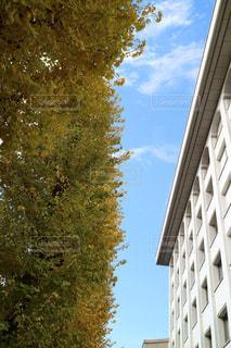 背の高い建物の写真・画像素材[1255768]