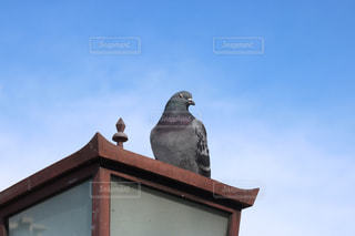 建物の上に座っている鳥の写真・画像素材[1255778]