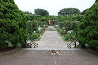ネコとガーデンの写真・画像素材[1260911]