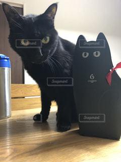 テーブルの上に座って黒い猫の写真・画像素材[1243990]