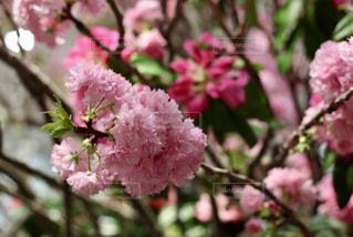 近くの植物にピンクの花のアップの写真・画像素材[1865136]