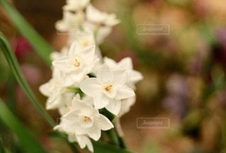 近くの花のアップの写真・画像素材[1872735]
