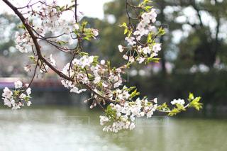 木の枝に花の花瓶の写真・画像素材[1882952]