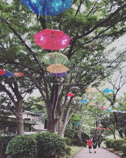 梅雨の散歩の写真・画像素材[1244725]