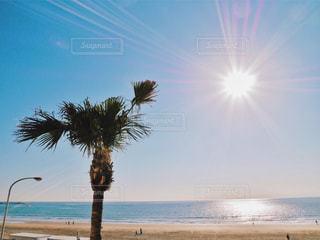 ビーチとヤシの木の写真・画像素材[1244991]