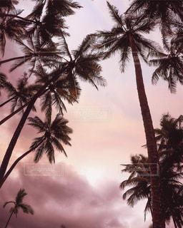 ヤシの木と夕焼け空の写真・画像素材[1244992]
