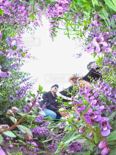 近くのフラワー ガーデンの写真・画像素材[1245039]