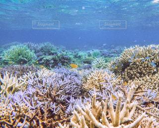 サンゴの水中ビューの写真・画像素材[1245102]