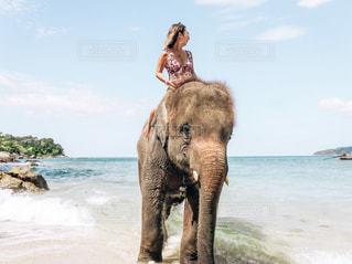 水の体の横に大きな象立っての写真・画像素材[1652236]