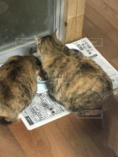 床の餌を食べる猫の写真・画像素材[1245143]