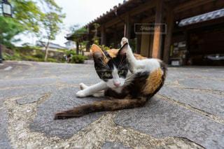 地面に横になっている猫の写真・画像素材[1245452]