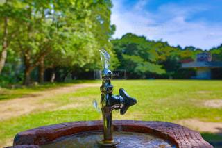 水の恵みの写真・画像素材[1245497]