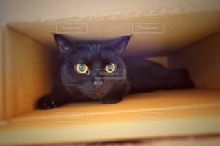 黒の表面の上に座って猫の写真・画像素材[1245605]