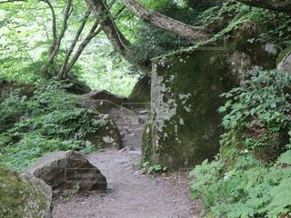 森の中の写真・画像素材[1410443]