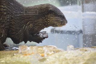 水の動物の写真・画像素材[1245830]