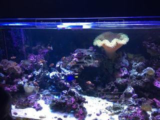 水族館のグループ 色とりどりの魚の写真・画像素材[1246354]