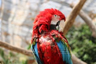 カラフルな鳥の写真・画像素材[1247048]