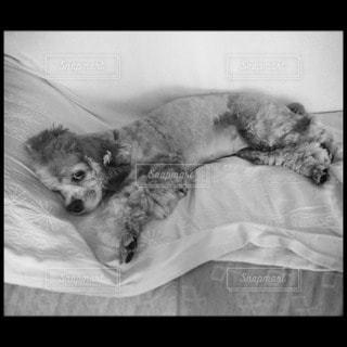 犬の写真・画像素材[44602]