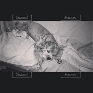 犬の写真・画像素材[44603]
