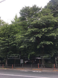 道の真ん中にツリーの写真・画像素材[1247289]