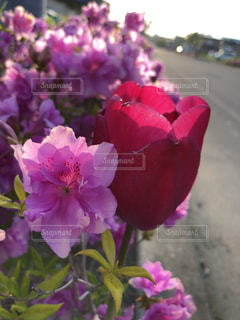 近くの花のアップの写真・画像素材[1247309]