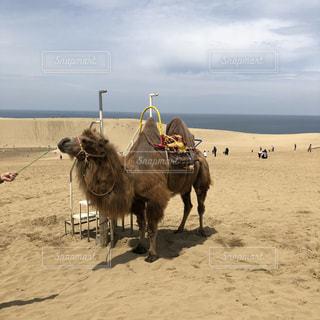 砂浜の上に立つ人々 のグループの写真・画像素材[1247379]