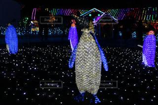 イルミネーション(ペンギン」の写真・画像素材[1247821]