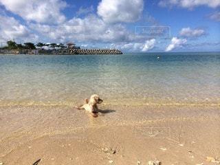 犬の写真・画像素材[57877]