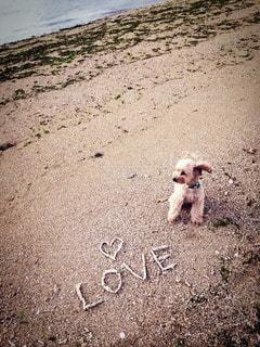 犬の写真・画像素材[58282]