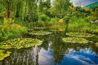 モネを感じる池。の写真・画像素材[1292686]
